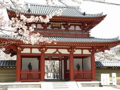 11時にチェックアウトして聖光寺で花見しました。 桜の花の満開に合わせて訪れました。 主にソメイヨシノが植えられています。