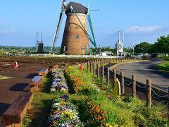 僅かに残る花壇のお花畑とオランダ風車リーフデ。 花とのコラボはこれだけ。
