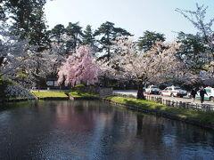 そして、弘前公園東門口に到着です!  外濠は、右も左も桜並木が続いています。 私は、東門から外濠を南下しながら桜散歩することにしました。