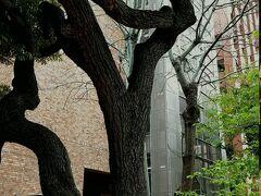 聖橋を渡って橋の袂のあたり、東京医科歯科大学の敷地前に『近代教育発祥の地 』という案内板を見つけました。  確かに、ここ御茶ノ水は大学や専門学校など学び舎が多いところだと思います。 区も文京区ですし(実際には文京区と千代田区の境目くらいでしょうか?) それに、この付近にある大学は、偏差値が高いところが多いような。
