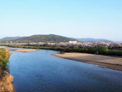 桜を愛でる旅の2日目 インターネットで見つけた京都の桜スポット「背割堤」へやってきました。 正しくは淀川河川公園 背割堤地区というらしいのですが、堤沿いに植えられた約220本のソメイヨシノのトンネルが約1.4kmにわたって続く、人気のお花見スポットです。  ※淀川河川公園HPより https://www.yodogawa-park.go.jp/annai/sewaritei/