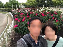 噴水塔の奥には薔薇がたくさん植ってました!