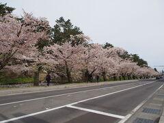 2日目朝の弘前公園です。 今日も外濠の桜はキレイです。 ただ、朝は雲りですね。