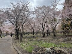 隣接する円山公園も桜が咲き誇っていました。
