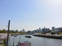 銀橋の上から見た毛馬桜之宮公園です。  大川沿いに桜並木が続きます。  桜クルーズ船も行き交っています。