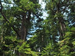 階段横に立っているのが天然記念物に指定されている塩船観音の大スギ。両側にあるので「塩船観音の夫婦杉」と呼ばれています。左側のスギは幹回り約5.7m、樹高約43m。右側は幹回り約6.6m、樹高約40m。カメラに収まりきらないほど巨木で、風格を感じます。