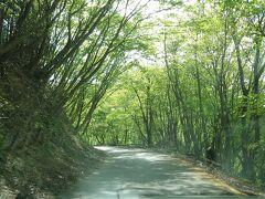 さて車に戻って移動開始。林道は新緑のトンネルで綺麗ですが、自転車がかっ飛ばしてくるのでなかなか怖い…今回もヒヤッとした場面があったので、サイクリングを楽しまれる方はスピードの出し過ぎに注意してください。(特に下り坂先のブラインドコーナーが危険です。)