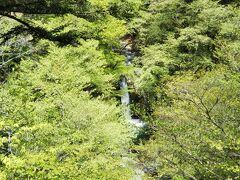 小泉の滝。 でも、良く見えません。とは言え四万温泉に滝はいくつか在りますが、道沿いに在る滝見園地(展望台)から眺められるのはこの小泉の滝だけだそうです