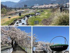 ホテルをチェックアウトして、タクシーで馬見ヶ崎公園へ。山形名物、芋煮の鍋がすごい!3万人分が作れるとか。  山形市内の桜の名所はここと霞城公園らしいのですが、かなり期待外れでした・・