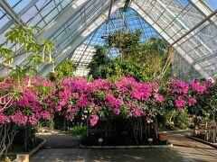 ホテルから歩いてすぐの函館市熱帯植物園にやってきました。  入園料は300円です。
