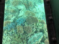 乗ってよかった!覗く海の中は想像以上に美しく珍しい魚と珊瑚が見えました。見どころに何箇所か止まって丁寧に説明していただけます。