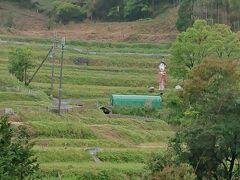 志村さんに似た案山子がこちらを見ています。 のどかな風景ですね。
