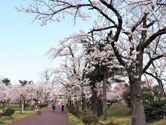 公園を散策するとちょうど桜が満開、例年より早い開花だそうです。  今年度は桜まつりは中止とのことです。(  https://www.city.gosen.lg.jp/organization/13/7/3/2/5130.html  )