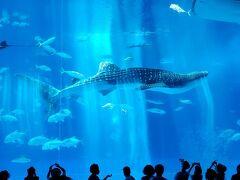 歩いて10分もかからず水族館に到着!間近で初めてジンベイザメをみた子供は大興奮。大人もやはり何度みても迫力満点の姿に胸を打たれます。子供はジンベイザメのそばにいるコバンザメ的な魚に興味津々。