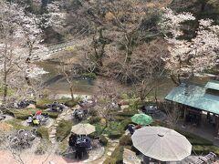 わぁ~ 桜が咲いてる、咲いてる (=^・^=)