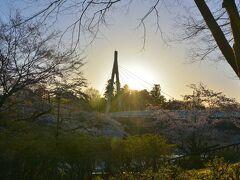 眩しい朝日と鮎美橋と桜の風景