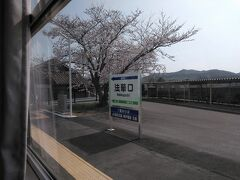 ●北条鉄道 法華口駅  北条鉄道 粟生駅行の車内から。 法華口駅のホームにも立派な桜の木がありました。
