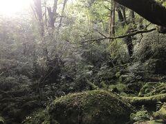 8:00 苔むす森  こだまを探せ!