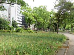 横浜スタジアムのある横浜公園のチューリップも、開花の時は過ぎて今は葉と茎が残るだけ。