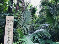 雨でぬれたみどりもまた、ジャングルっぽくて良かったです