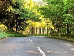 御殿場から乙女峠経由で1時間のドライブ、ホテルに向かいます。 この坂を上りきると