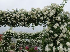 「山下公園」未来のバラ園 バラのアーチも満開でした