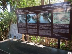28<源兵衛川> 白滝公園から100mほど行ったところにあるのが、これも「水の都」を象徴する「源兵衛川」。これは、三島駅前にある「楽寿園」で湧き出す富士山の伏流水を源流として市街地南部のため池まで続く全長約1.5kmの農業用水路です。