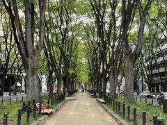昼食後はホテルで昼寝をしたり、風呂に入ったりのんびりしました。旅行の中日ですのでちょうどいいですね。さて、夕食は、ケヤキ並木が美しい定禅寺通の近くにある・・・