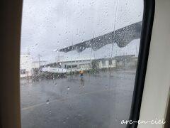このどしゃ降りの雨が、ニャンジの涙雨に思えました。