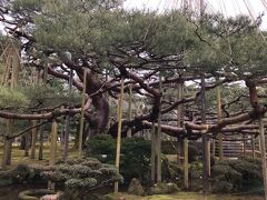 雪吊り見たくて、金沢行くなら冬と決めていました。雪はなくて残念だけど。 日本の三大名園だけあって、想像以上に満足。