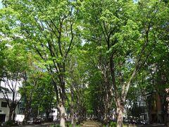 「定禅寺通り」だ。  ケヤキ並木に囲まれた幅12mものグリーンベルトを持つ、仙台を象徴する道路だ。 冬には光のページェントが行われる。なんといってもこの時期が一番美しいし、仙台に来たらぜひ見て行って欲しい。
