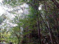 バスの時間が迫っています 弥生杉は諦めようかなと思っていたんですが、このコースかなり整備されてて歩きやすそう ということで、走ります グダグダ行ってる割には人参がぶら下がってれば走る体力はあるみたい  行きやすい場所にある杉としては見ごたえはあるかもしれない けど、色々な屋久杉を見て最後に見ると、そうでもないかも 屋久島に来る前に見る木としては周囲8.1m、樹齢3,000年って十分すごい木だと思うのですよ しかも他の木があるんで、写真で大きさも伝わってないし