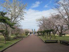 12:50 本日66km(トータル305km)  道の駅に隣接しているオニウシ公園。 ちょうど桜が満開でした。