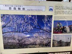 この案内によれば 曽我梅林は別所・中河原・原の3つの各梅林からなりその規模は約90ヘクタール、3万5千本の梅が咲き誇るとのこと。
