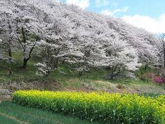 南松本駅から約2km歩いて弘法山古墳へ。ここは全国的にはあまり知られていないが、北アルプスも眺められる桜の名所。