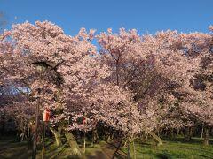 南松本からJRで伊那北へ移動し、伊那北駅前からバスで高遠駅という名のバスターミナルへ。そこから1kmちょっと歩いて高遠城址公園へ。入園料500円。
