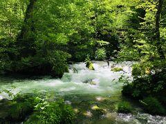 奥入瀬渓流、のイメージそのものの風景がいきなり現れた!