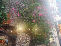 隣のお店に咲いていた南国っぽい花 綺麗ですね~