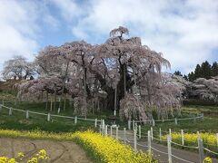 そして目の前には滝桜!