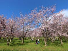 見頃の時季を探りながら、合わせて天気の具合を見ながら5月6日、丁度良い時季に自宅からも近い東川町のキトウシ公園を訪れました。