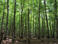 星峠の棚田に向かっている途中に美人林の案内があり、立ち寄ってみました。