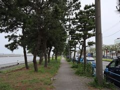松林が続く海岸線です