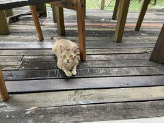 宿に戻るとニャンコが待ち構えていました。 名前は「ピカちゃん」 飼い猫ではなく、ご飯を貰いにくるニャンコです。 最初は警戒されてたけど帰るころには懐いてきた。(#^.^#)