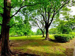 ママチャリで10~15分程の場所にある、亀戸中央公園。 まるでNYのセントラル・パーク(←お得意) 桜や山茶花も楽しめる下町のオアシスです。