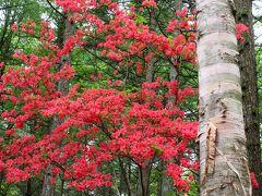 群馬県立伊香保森林公園