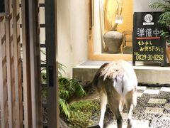宮島に泊まったから見れる 夜の街を闊歩する宮島の主 鹿