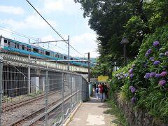 京浜東北線とあじさい 跨線橋からだと下に電車の往来を見られます