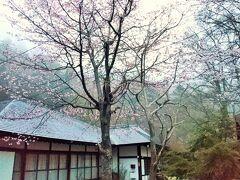 ホテルから徒歩5分、ここが温泉寺だそうです。鹿の集合場所になっていました。