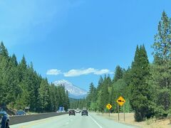 Reddingを北上するとちらほらとシャスタ山が見えてきます。 今年度の北カリフォルニアの積雪量は例年比のたった数パーセントとのこと、 積雪の少なさが気がかりです。
