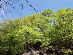 青空に抜ける黄緑色の新緑が、疲れた体にエールを送ってくれます。あともうひと頑張り。